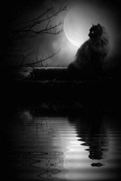 Full Moon Cat. °