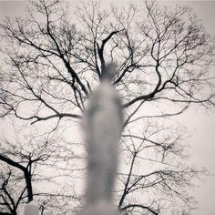 Timely atmosphere by @erik.gould #graflex #film #atmosphere #moody #tree #ishootfilm #filmisnotdead #believeinfilm #keepfilmalive #blur #filmshooterscollective  Tag your Halloween-ish film photo posts with #heyfsc! by filmshooterscollective
