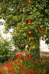 Garden on pinterest drought tolerant valley nursery and lowes - Planting fruit trees in the fall a garden full of vigor ...