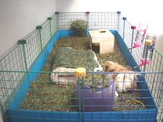 Cubes and Coroplast for C&C Cages for Guinea Pigs