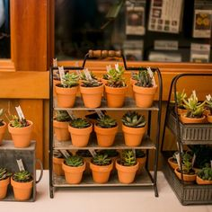Ever wondered whether your succulents can survive in the office or work environment? Spice up the office & have a read here at Succulent City to be sure! Dwarf Plants, Jade Plants, Sick Building Syndrome, Lucky Plant, Zebra Plant, Sansevieria Trifasciata, Crassula Ovata, Small Succulents, Snake Plant