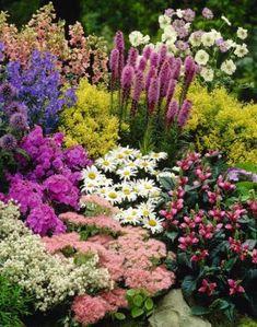 9 magas növésű, látványos évelő, melyeknek ott a helye a Te kertedben is! - kert.tv Full Sun Perennials, Best Perennials, Dianthus Flowers, Flowers Perennials, Plant Zombie, Cottage Garden Plants, Square Foot Gardening, Colorful Plants, Flowers