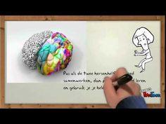 Werking van de hersenen - YouTube