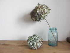 枝付き紫陽花のドライフラワー driedflower|FLEURI blog