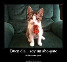 abogado/gato = advocaat/kat