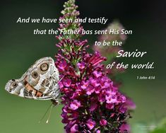 1 John 4:14 Bible Scriptures, Bible Quotes, 2 Timothy 3, 1 John 4, Christian Inspiration, Word Of God, Thoughts, Words, Heart