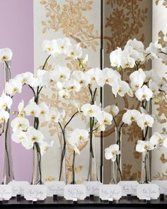 Re-create this escort card garden by grouping phalaenopsis orchids in slim vessels of varying heights