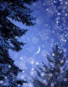 Magic Night Forest