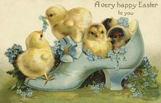 Oh, little chicks in a shoe!  Too cute!!!