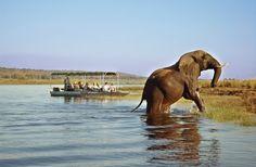 Parc national de Chobe - voyage et safari au Botswana - Safaris à la carte Chobe National Park, Parc National, National Parks, Chutes Victoria, Lac Rose, Safari Holidays, Okavango Delta, Safari Adventure, Viewing Wildlife