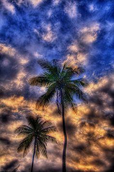 http://IslandTime.mobi The Palms