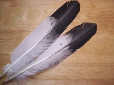 Indian Eagle Feather | ... hand-painted imitation eagle feathers are used as the roach feather