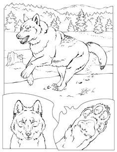 Printable Gray Wolf - Printable Coloring Book - Free Printable Coloring Pages Coloring Pages Nature, Horse Coloring Pages, Coloring Pages To Print, Printable Coloring Pages, Adult Coloring Pages, Coloring Books, Free Coloring, National Geographic Animals, Animal Books
