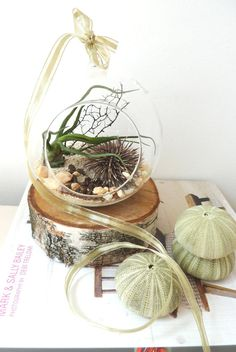 Hanging air plant terrarium // glass orb // Home and Living // Indoor Garden // sea urchin // sea fan