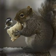 Sharing With A Friend :) By MNFISH on flickr