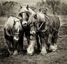 Gigi Embrechts Photography Equine, Pet and Rural Life Photography - Horses