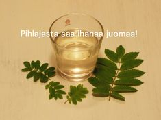 Pyhästä pihlajasta saa upeita juomia | Hortoilu.fi Beverages, Drinks, Creative Food, Superfood, Preserves, Shot Glass, Brewing, Smoothies, Herbalism