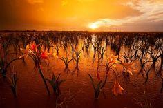 Maravilhas da Natureza - Paisagens da Namíbia 18