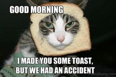 funny good morning memes The best way to outset your day is by reading funny good morning quotes. Here is our collection of cute, sweet, and romantic Funny Good Morning Quotes Good Morning Funny Pictures, Morning Memes, Funny Good Morning Quotes, Good Morning Picture, Morning Qoutes, Good Morning Sunshine, Good Morning Wishes, Funny Memes, Hilarious