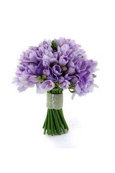 lavender fressia