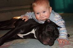 Oh yes this pit is eating the baby alive with the huge smile on its face! Don't blame the breed blame the ignorant people that raise them!