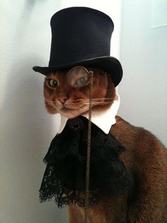 Abyssinian supermodel Toki Nantucket will even wear a monocle, if it's attached to his top hat. He exclusively represents his person's etsy studio, CatAtelier . Link goes to his Facebook page. Animals And Pets, Baby Animals, Funny Animals, Cute Animals, I Love Cats, Crazy Cats, Cool Cats, Photographie Portrait Inspiration, Cat Sweaters