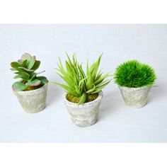 Found it at Wayfair - Greenery Succulents in Aged Pot
