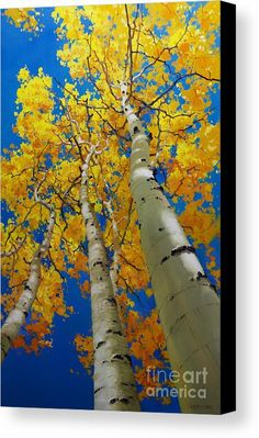 Blue Sky and Tall Aspen Trees Acrylic Print by Gary Kim. All acrylic prints are professionally printed, packaged, and shipped within 3 - 4 business days and delivered ready-to-hang on your wall. Choose from multiple sizes and mounting options. Oil Painting Flowers, Watercolor Trees, Oil Painting Abstract, Fall Tree Painting, Tree Canvas, Canvas Art, Landscape Art, Landscape Paintings, Tree Paintings
