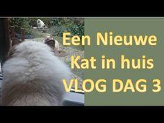 KATTEN | Een nieuwe kat erbij vlog dag 3