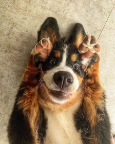 crescentmoon animalia Cute Little Animals, Cute Funny Animals, Funny Dogs, Fluffy Animals, Animals And Pets, Cute Animal Pictures, Animals Of The World, Peek A Boos, Belle Photo