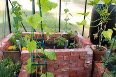 Blumat kastelujärjestelmä kasvihuoneessa - Kivikangas
