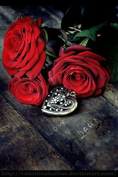 love-roses-are-red:  TRUST iS THE HARDEST THiNG TO FiNDAND THE EASiEST TO LOSE