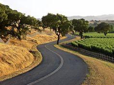 This Valley has my HEART! Santa Ynez Visit Santa Barbara, Santa Barbara County, Wine Country, Country Roads, Beachfront House, Santa Ynez Valley, Canyon Road, Old Trees, California Dreamin'