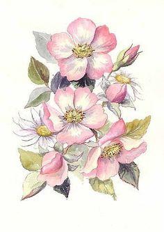 Картинки по запросу цветок шиповника рисунок