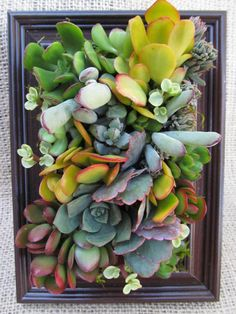 Succulents suitable for framing  Bright and by SucculentSolutions, $20.00