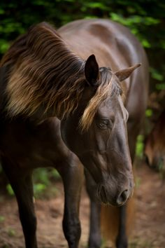 Professional And Award-Winning Equine Photography