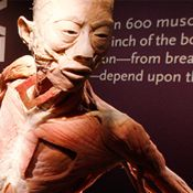 Bodies Exhibit- a Look Inside Human Anatomy Bodies Exhibit, Las Vegas, Losing 10 Pounds, 45 Pounds, Major Muscles, Weight Training Workouts, Low Self Esteem, Muscle Groups, Human Anatomy