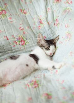 Young kitty cat sleeping blissfully on flowered quilt on sofa  by Laura Stolfi