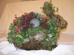 succulents on sculpture rabbit - Google Search