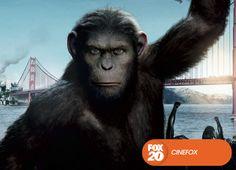 Uma substância criada para ajudar na autocura do cérebro dá origem a um chimpanzé superinteligente, que lidera a revolta dos macacos. Planeta dos Macacos: A Origem - Domingo, 6 de outubro, 22H #EuCurtoFOX Confira conteúdo exclusivo no www.foxplay.com