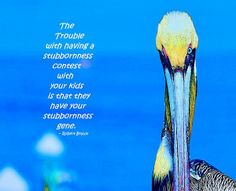 71 Best Beautiful glorious Pelicans images | Pictures, Sea ...