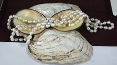 Knotting pearls necklace - Lady Gina Dragoni - Kingdom A&S 2017