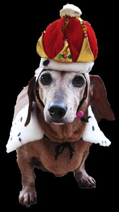 The Crown Jewels dog hat and tippet--NYC Pet Fashion Show-- Inspiration image