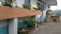 """Plywood planter on terrace. These are plywood boards that have been sawed into 1'*1' boards and then nailed together. The legs are 4"""" AAC blocks."""