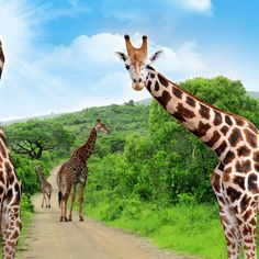 10 of the best: Exciting excursions in South Africa