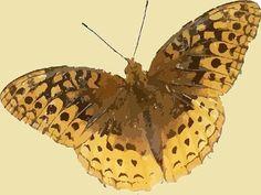 Вы токого еще не видели. Мгновение бабочки-самые красивые насекомые природы