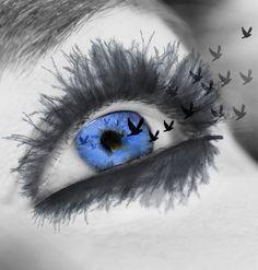 source: https://pixabay.com/en/eyelashes-eye-view-close-iris-831803/