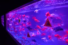 """Fusion of """" Art """" and """" Aquarium """" About goldfish in water tank. Feel """" Refresh on Summer """". Duration of Availability Location Nihonbashi-Mitsui-Hall Address"""