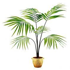Parlor Palm Tree- Chamaedorea Elegans