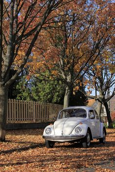 Volkswagen – One Stop Classic Car News & Tips Beetles Volkswagen, Volkswagon Bug, Auto Volkswagen, Vw Bus, Vw Camper, Retro Cars, Vintage Cars, My Dream Car, Dream Cars